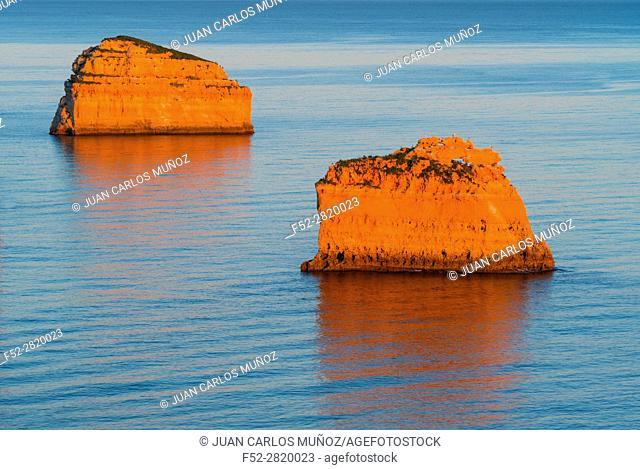 Gulls, Praia da Marinha, Algarve, Atlantic Ocean, Portugal