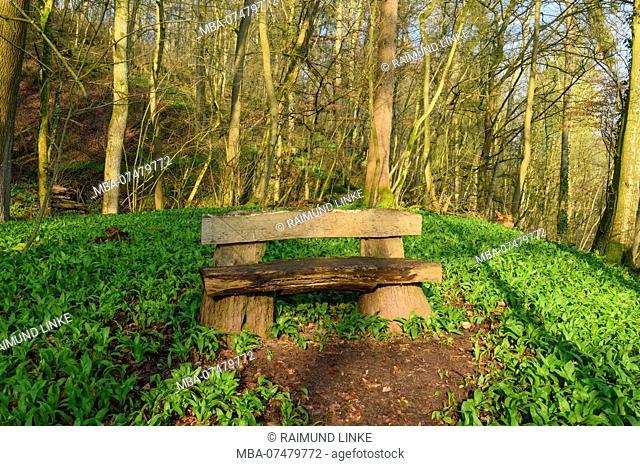 Bench between Wild garlic, Allium ursinum, with sun in spring, Triefenstein, District Main-Spessart, Bavaria, Germany