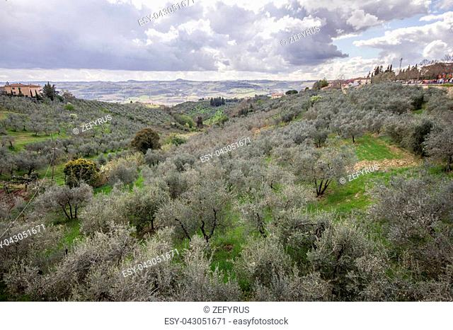 The Tuscan hills among olive trees and cultivated fields.The sky is cloudy. Italy