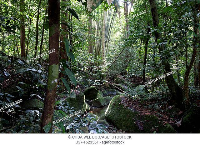 Gunung Gading National Park, Lundu, Sarawak, Malaysia