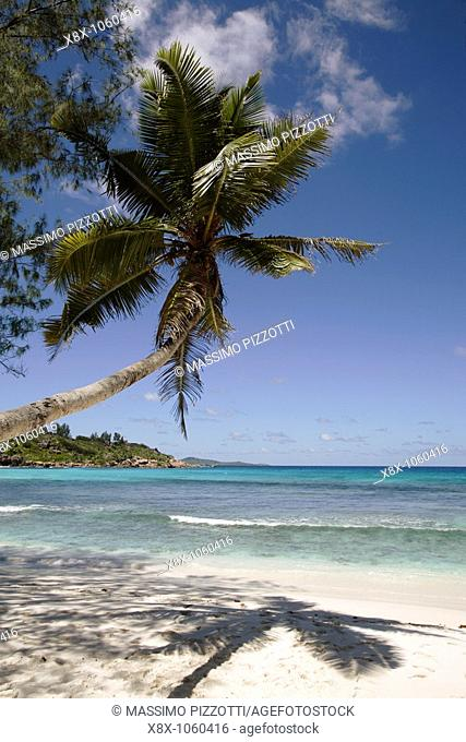 Palm trees overhanging beach in Anse Cocos, La Digue Island, Seychelles