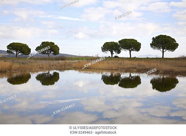 Diaccia Botrona natural reserve, swamp, Castiglione della Pescaia, province of Grosseto, Tuscany, Italy, Europe