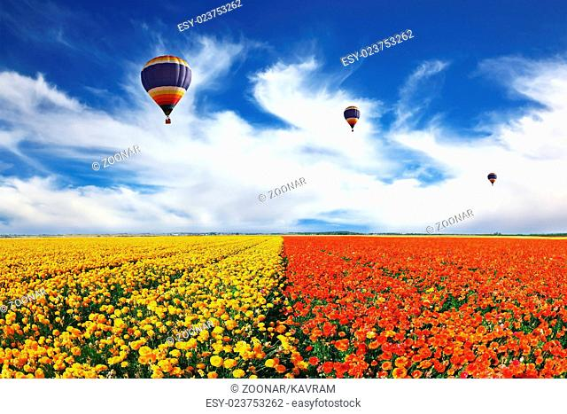 Three balloons flying over the field