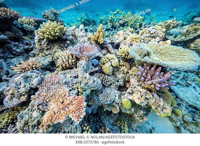 Underwater view of the south end of Ribbon 10 Reef, Great Barrier Reef, Queensland, Australia