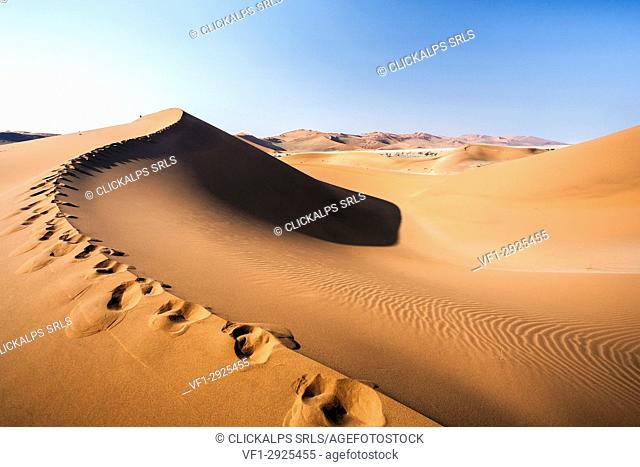Sand dunes shaped by wind Deadvlei Sossusvlei Namib Desert Naukluft National Park Namibia Africa