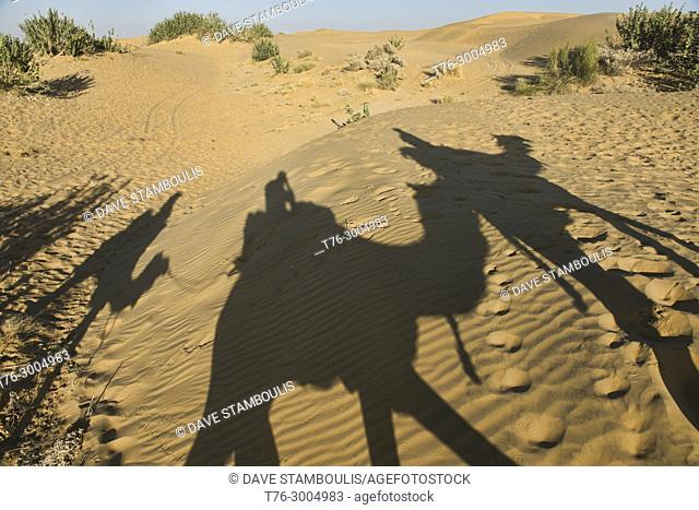 Camel shadows in the Thar Desert, Rajasthan, India