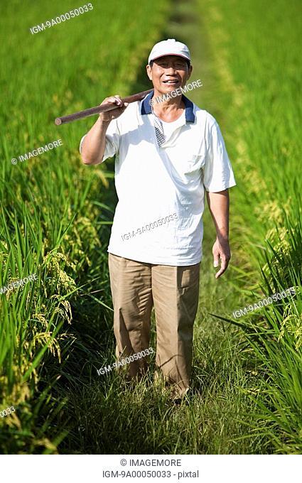 Elderly farmer carrying hoe on shoulder in rice field