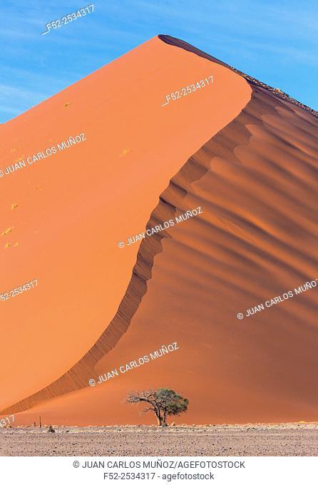 Namibia, Namib Naukluft National Park, Single tree in desert against sand dune