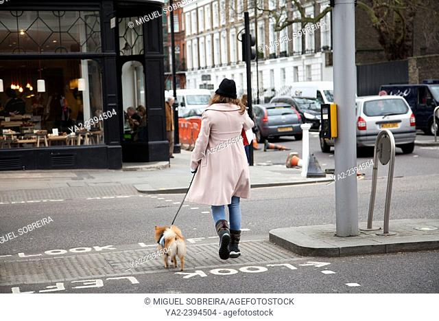 Woman Crossing Road with Small Dog on King's Rd in London UK