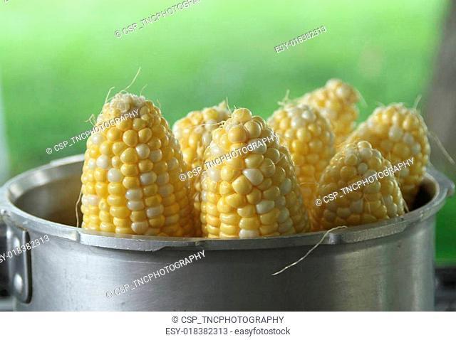 Sweet Corn in a pot
