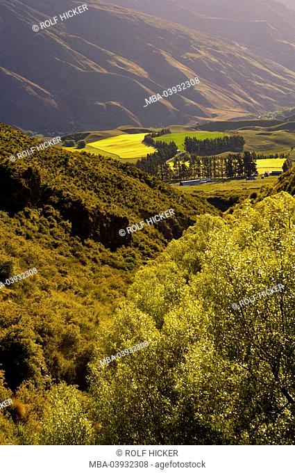 New Zealand, South-island, Central Otago, Kawarau-Valley, field-landscape, destination, landscape, valley, view, hills, mountains, fields, meadows, trees