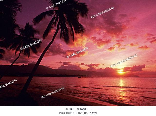 Palm trees silhouetted by bright pink sunset sky