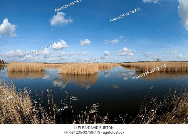 View of open water and reedbed habitat, Strumpshaw Fen RSPB Reserve, River Yare, The Broads N P , Norfolk, England, february