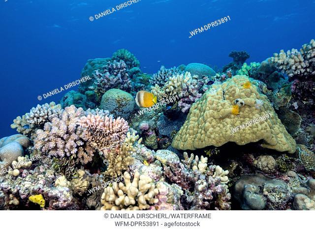 Coral Reef, Cod Hole, Great Barrier Reef, Australia