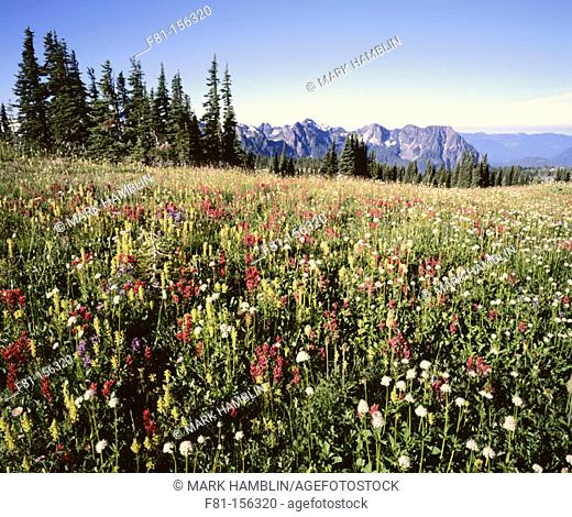 Mount Rainier NP. Washington. USA