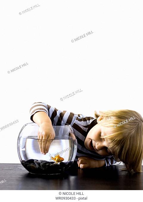 USA, Utah, Provo, Boy 2-3 touching goldfish in bowl