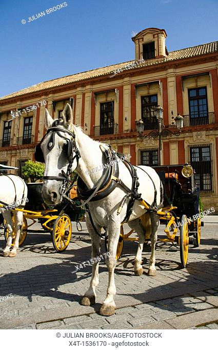 Horses waiting in the hot midday sun to carry tourists in carriages around the streets of Seville, Spain