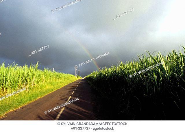 Rainbow among cane fields. Réunion, France