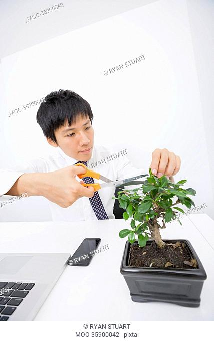 Asian businessman pruning plant at office desk