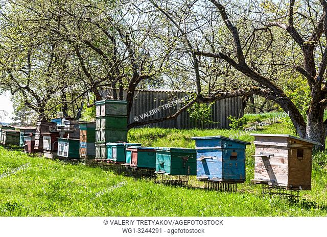 Ulyany, Kyiv region, Ukraine - Beehive with bees at the apiary in Ukraine. Fruit garden with green grass at spring time