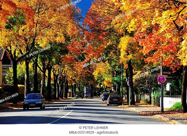 Germany, Bavaria, Garmisch-Partenkirchen, piece of Martinstrasse, avenue trees, autumn