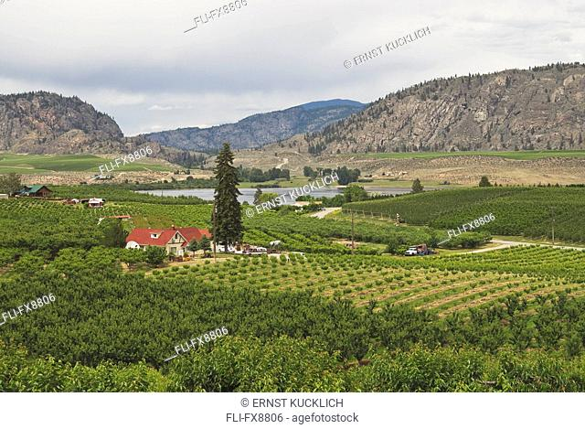 Orchards and Vineyards near Osoyoos, BC