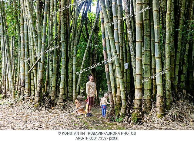 Photograph of father with son and dog standing in bamboo forest, Bedugul, Bali, Indonesia