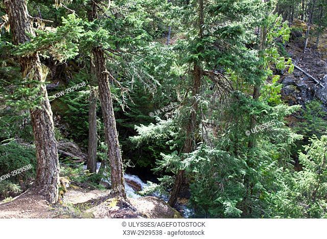 Ross Dam Trail, State of Washington, USA, America
