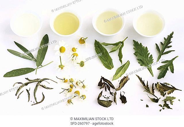 Sage, chamomile, mint and verbena tea