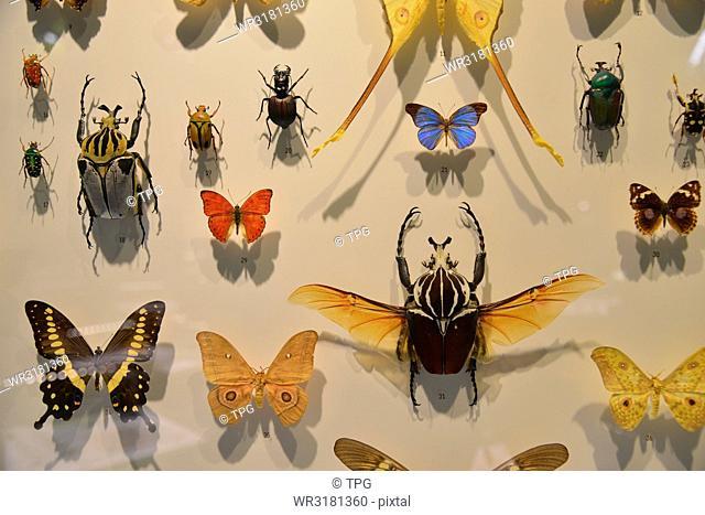 spot- Jardin Botanique & Insectarium
