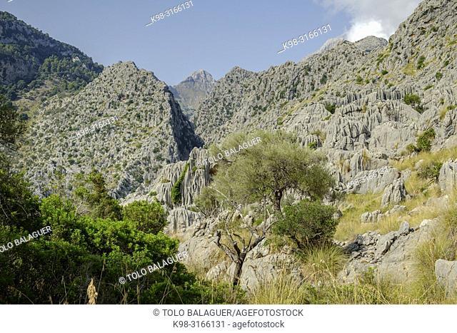 paisaje carstico de es Torrent des Boverons y Entreforc, , Escorca, Paraje natural de la Serra de Tramuntana, Mallorca, balearic islands, Spain