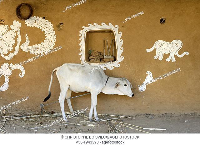 India, Rajasthan, Tonk region, Young calf and Mandana paintings