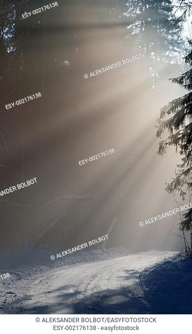Misty forest in winter morning with sunbeam entering