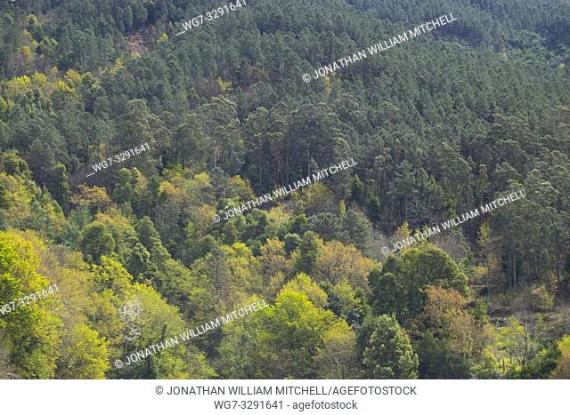 Springtime view of deciduous and pine forest in the mountains of northern Portugal