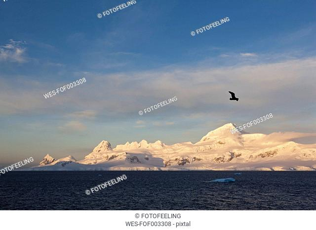 South Atlantic Ocean, Antarctica, Antarctic Peninsula, Lemaire Channel, View of gull flying over snow coverd mountain range