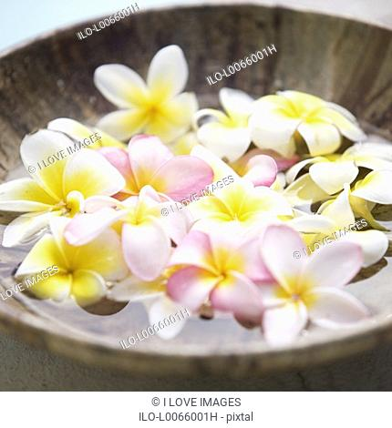 Close-up of a bowl of flowers