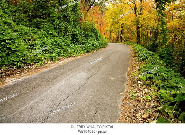 Kudzu, Autumn, Cherokee National Forest, Tennessee