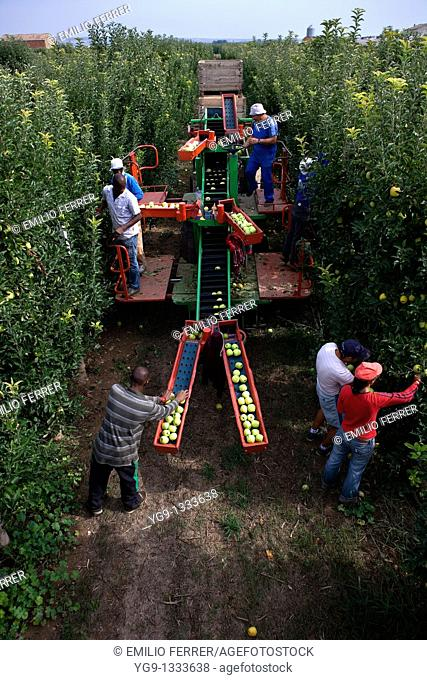 Collecting apples with machine  LLeida, Spain