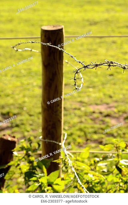 Paddock fence post with barbed wire. Shot in the Limburg province of the Netherlands