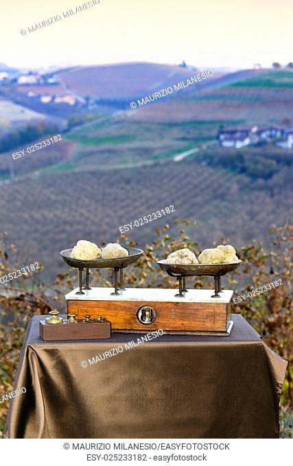 Some white truffles on the vintage scales, in the background hills with vineyards in autumn Langhe Piedmont Italy