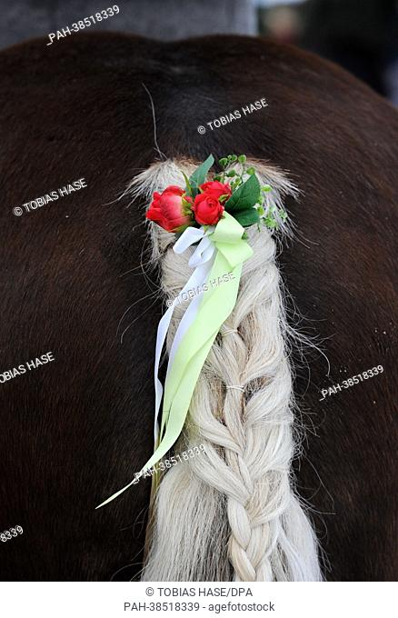 The tail of a horse is braided and decorated during the traditional Georgiritt - a horse parade in commeoration of Saint Georg - in Traunstein on Easter Monday