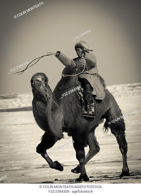 Bactrian camel race, 25km across winter landscape of Gobi desert during Bulgan's 'festival of a thousand camels' , Mongolia