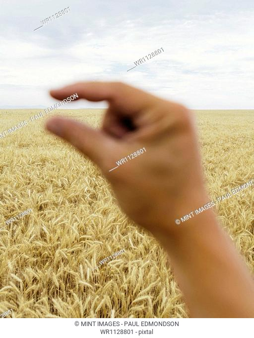 A human hand with the tips of the finger and thumb close together. Framing the line of the horizon. A field of ripening wheat