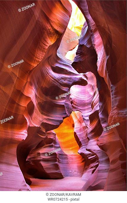 Canyon Antelope