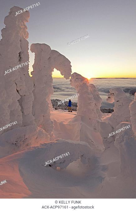 A skier among snow ghosts creates a beautiful environment at sunrise at the top of Sun Peaks Resort, Thompson Okangan region, British Columbia, Canada