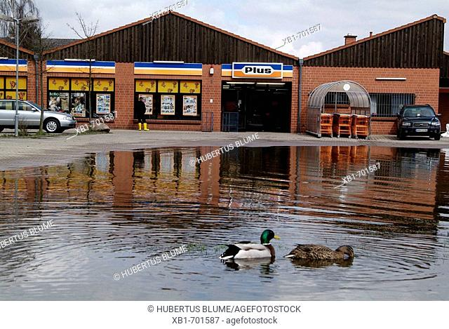 Germany, Lower Saxony, Hitzacker, flood, ducks