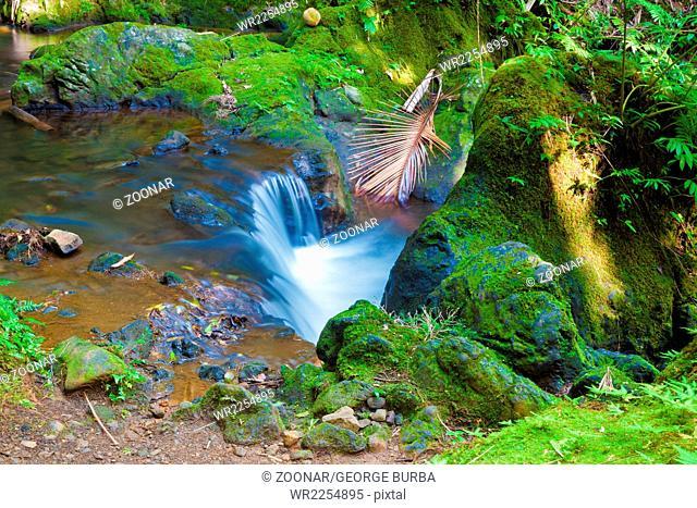 Stream through a tropical rainforest