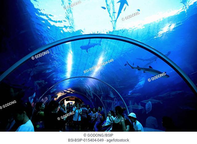 Tourists at S.E.A. Aquarium. Sharks. Sentosa island. Singapore. Singapore