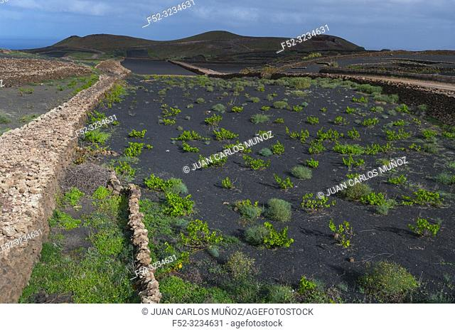Rural landscape, Tinajo, Lanzarote Island, Canary Islands, Spain, Europe