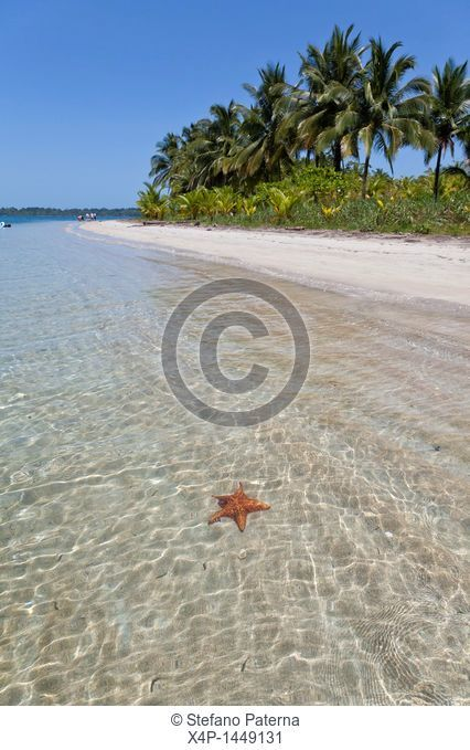 Starfish Beach, Isla Colon, Bocas Del Toro, Panama